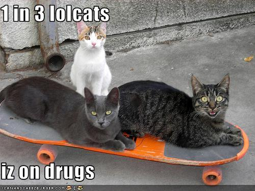 Mental Health Monday - LOLCats FTW