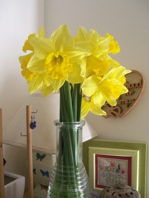 Daffodils for Yankee Elv