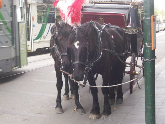 The trams scared the poor horses. Horses shouldn't be in the city anyway!