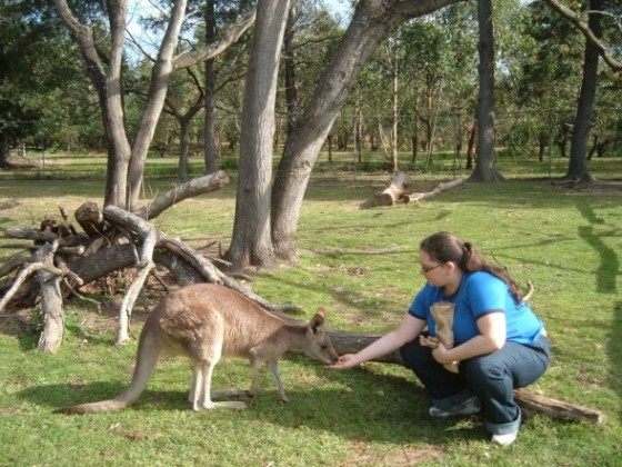 Yankee Elv feeding a kangaroo at Lone Pine Sanctuary
