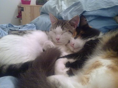 tabby cat and tortoiseshell cat snuggling together on a bed